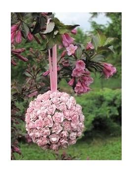 Krzewuszka cudowna  rosea- Weigela rosea