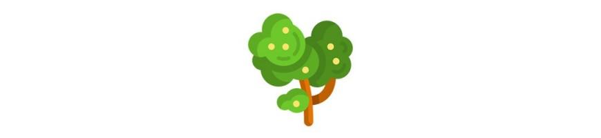 Bonsai, drzewa
